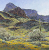 Carpet of Sunshine - Picacho Peak  Acrylic