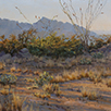Ocotillo Patterns 14 x 14 Oil